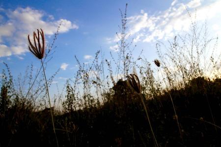 sun sky: Grass, sun, sky Stock Photo