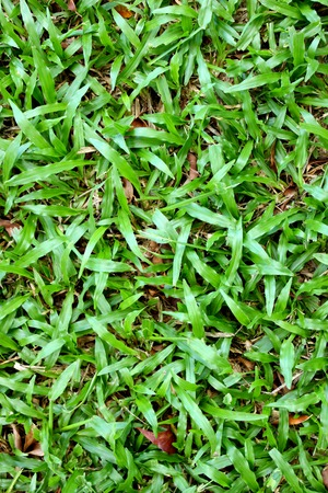textures: textures,grass