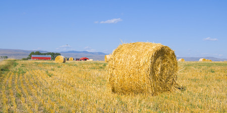 Rural landscape with hay bales and red farm house in background