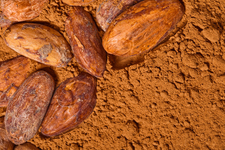 cacao beans and cacao powder Stock Photo