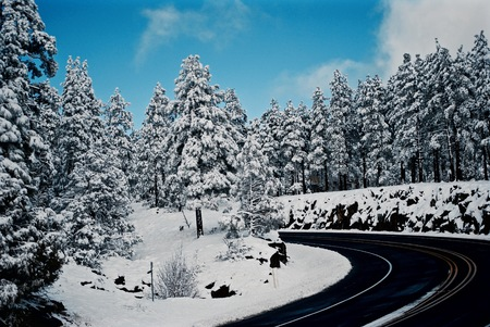 winterscape of snow dusted evergreens and a road