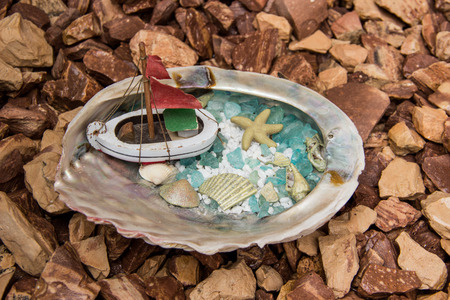 conch shell: Conch shell with boat