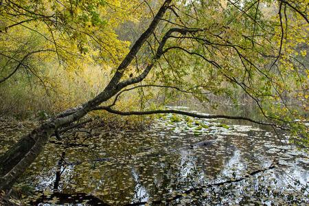 heathland: Leaning Tree Forest Lake in the Fischbeker heathland