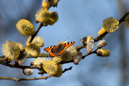 Small tortoiseshell on a branch Stock Photo