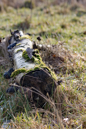 Old tree trunk overgrown with moss and fungus