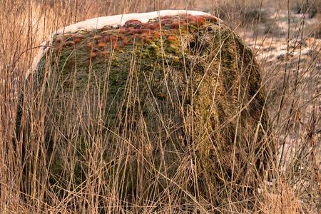 Old straw bales between brushwood