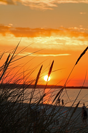 Sunset photographed by seagrass