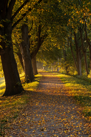 Hiking trail with trees, in autumn