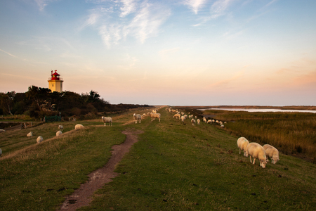 Sheep on the dike in the background Lighthouse Stockfoto - 117802188