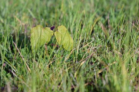 Tree seedling growing in the lawn Imagens