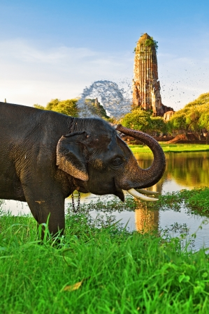 Elephant bathing in Ayutthaya, Thailand Stock Photo - 11318813