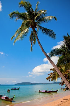 Palm tree in Ao Nang beach, Krabi, Thailand photo