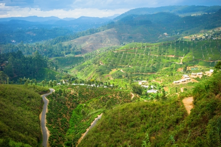 Tea plantation landscape in Hill country, Sri Lanka photo