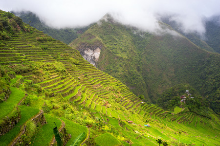 rice terrace: Panoramic view of the Batad rice field terraces in Ifugao province, Banaue, Philippines