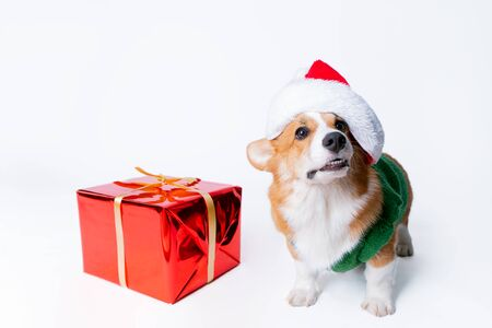 Portrait of the little funny puppy corgi in red santa claus cap, standing near present in studio isolated on white background Foto de archivo - 130774521