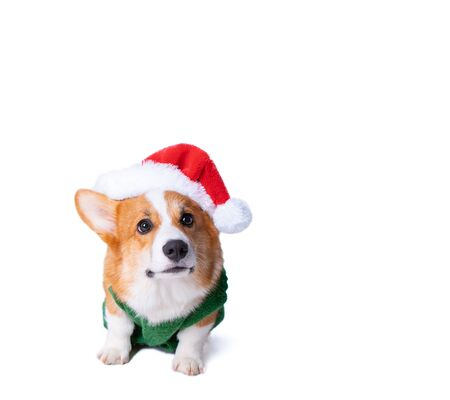 Portrait of the little funny puppy corgi in red santa claus cap, standing in studio isolated on white background Foto de archivo - 130774522