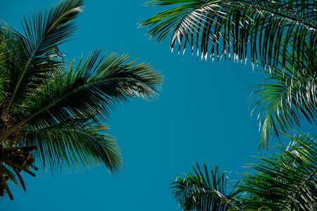 Palm trees background behind blue sky. Concept travel, vacation Foto de archivo - 133207087