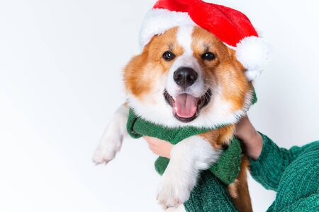 Portrait of the little funny puppy corgi in red santa claus cap, standing in studio isolated on white background Foto de archivo - 133207093