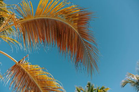 Palm trees background behind blue sky. Concept travel, vacation Foto de archivo - 132567681