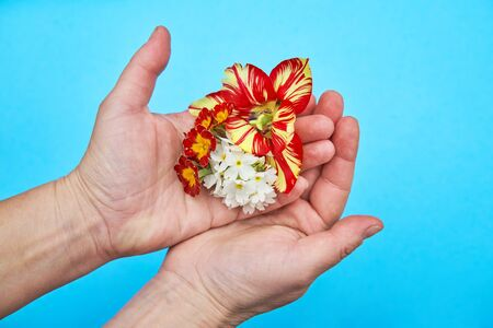 Garden flowers in the women hands isolated on the blue background
