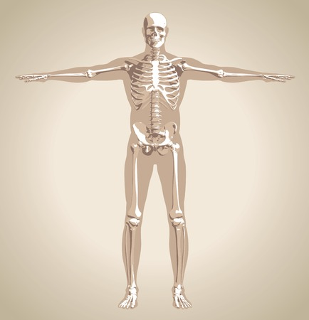 The human (male) skeleton on body background in the vintage style. Vector illustration