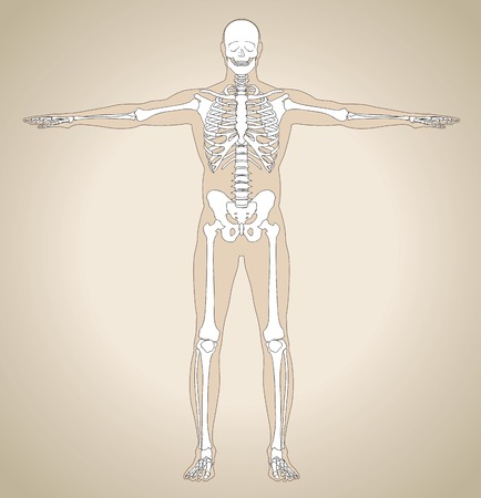shin bone: The human (male) skeleton on body background in the vintage style. Vector illustration