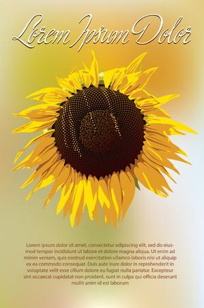 stamen: Sunflower on blurred background.  Illustration