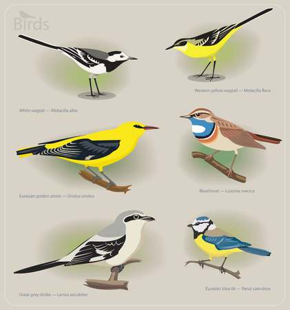 feathery: Image set of birds: white wagtail, yellow wagtail, golden oriole, bluethroat, grey shrike, blue tit. Vector illustration Illustration