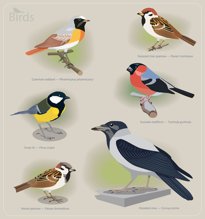 Image set of birds: common redstart, sparrow, great tit, bullfinch, hooded crow. Vector illustration