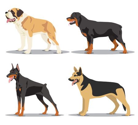 alsatian: Image set of dogs: Alsatian dog, St. Bernard, Rottweiler, Doberman. Vector illustration