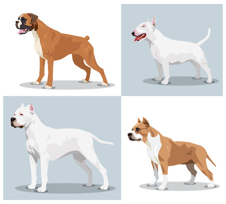 pit bull: Image set of dogs: Boxer, Bull Terrier, Dogo Argentino, American Pit Bull Terrier. Vector illustration 3d Stock Photo