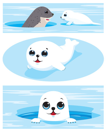 vulnerable: Set of images of harp seal pups. Vector illustration