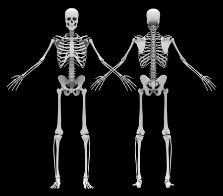 人間の (男性) の骨格です。前面と背面ビュー。黒の背景に分離された画像。3 D イラストレーション