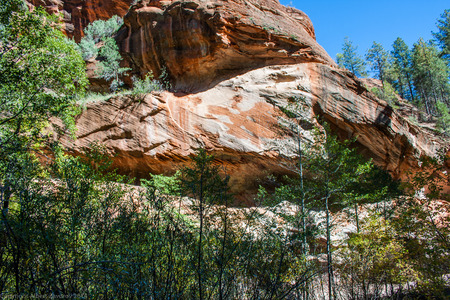 red rock: Red rock canyon surrounded by trees