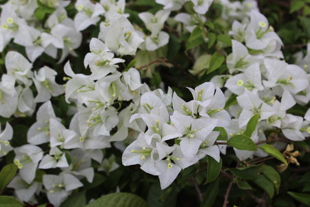 White flower and background of green and brown leaves 版權商用圖片 - 93234540