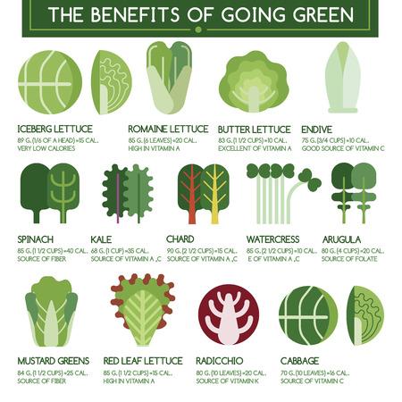 endivia: Los beneficios de ir verde Vectores