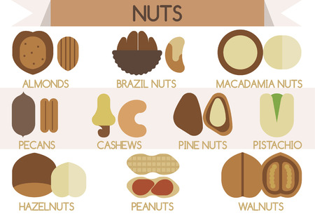 brazil nut: Nuts vector Illustrator
