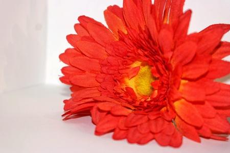 Red big flower
