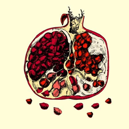 sap: Beautiful juicy pomegranate