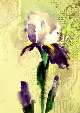 Beautiful violet iris flower. Иллюстрация