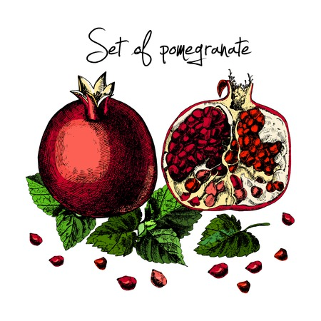 Set of pomegranate. Illustrations. Vector. Hand drawing.