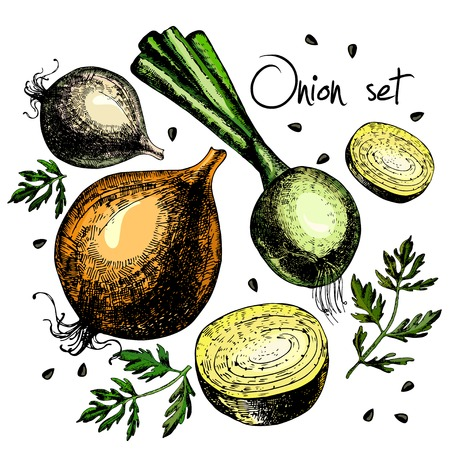 Set of onion. Illustrations. Vector. Hand drawing. Illusztráció