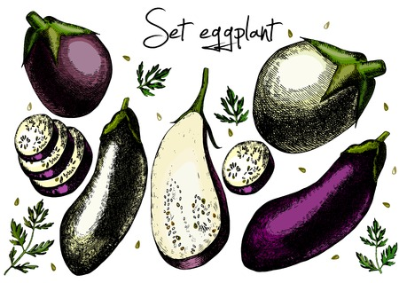 unpeeled: Set of eggplant. Illustrations. Vector. Hand drawing. Illustration
