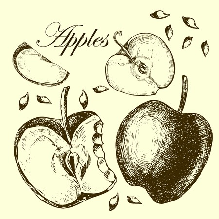Set of drawing apples.  Illustrations. Vector. Vector