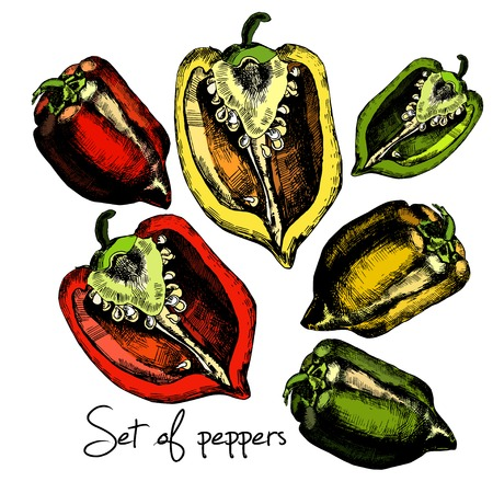 Set of  peppers. Illustrations. Vector. Vector