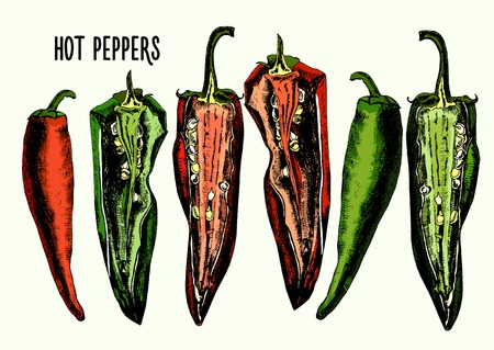 Set of hot peppers. Illustrations. Vector. Vector