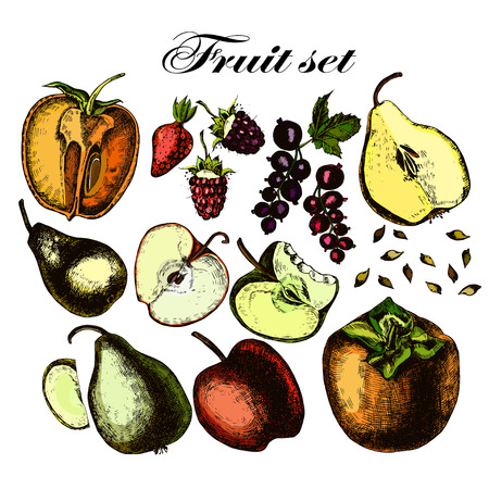 Set of fruits. Freehand drawing. Vector.