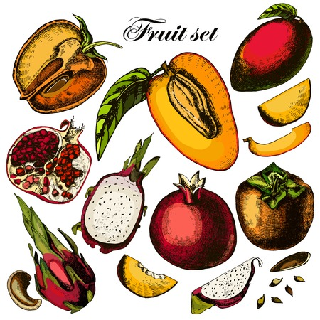 Set of fruits. Freehand drawing. Vector. Vector
