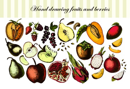 Hand drawing fruits and berries photo