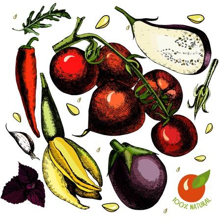 zucchini: Set with vegetables, tomato, eggplant, zucchini, garlic, hot pepper, basil Illustration